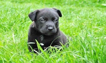 Kleine Hunde Kaufen: Worauf achten beim Hundewelpen kaufen?
