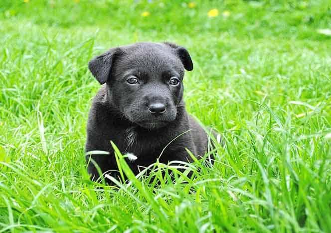Hundewelpen Zum Kaufen