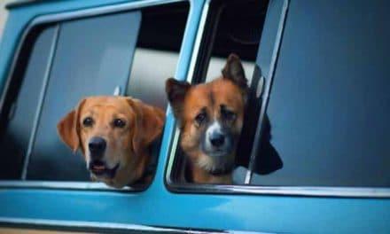 Die Autofahrt mit Hund: Wie verreise ich am besten mit dem Hund?
