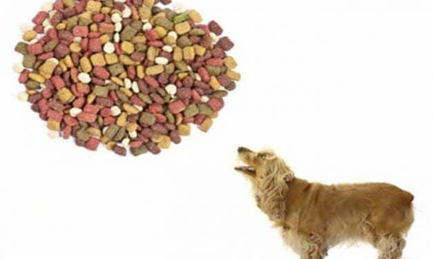 Gutes Hundefutter: Welches Hundefutter ist am besten?