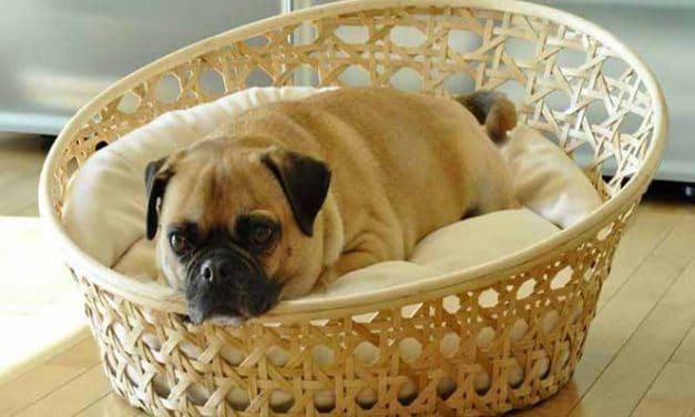Hundekorb aus Weide kaufen: Tipps & Vorteile