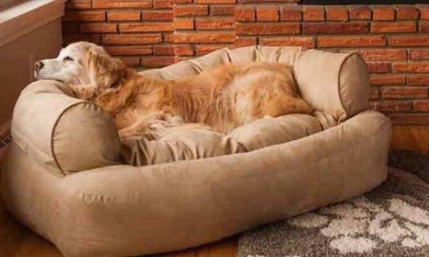 Hundecouch XXL Kaufen: Infos & Vorteile