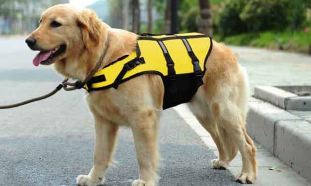 Hundewarnweste – Sicherheit durch Sichtbarkeit