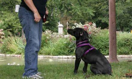 Einfache Hundeerziehung – Wichtige Kommandos