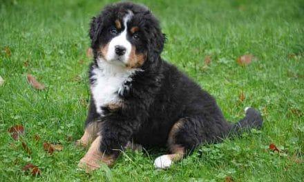 Hund anschaffen: Was muss ich vor Hundekauf beachten?