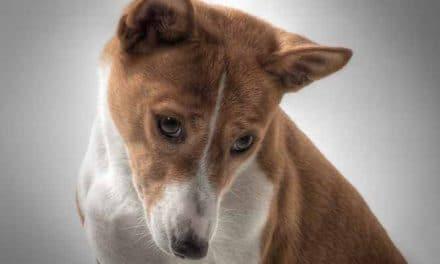 Hundesprache verstehen: Die Körpersprache des Hundes