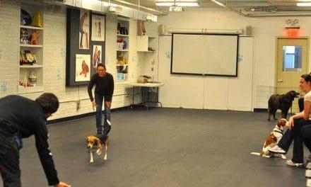 Hundeschule, Hundeausbildung & Hundetraining – Ein Muss für Hund und Halter