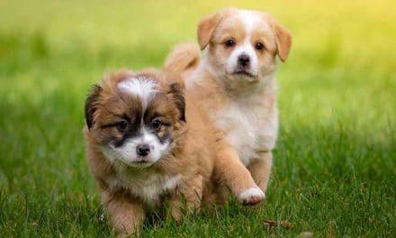 Coole & ausgefallene Hundenamen finden