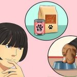 Welches Hundefutter ist das Beste für meinen Hund?