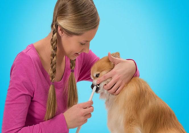 Die 5 wichtigsten Pflegetipps für deinen Hund