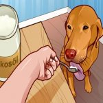 7 gesunde Gründe, deinem Hund Kokosnussöl zu geben