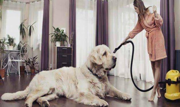 Die 7 größten Hunderassen der Welt #Nr.2 ist mein Favorit